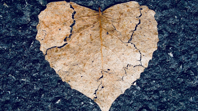 broken_heart_leaf