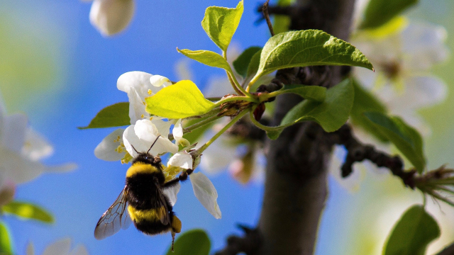 bumble_bee_flower