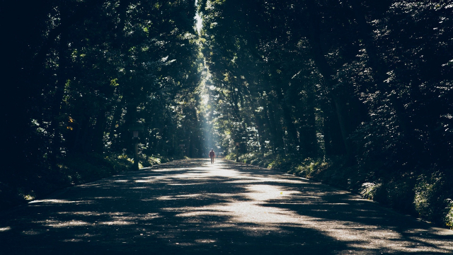 forest_alone_road_light