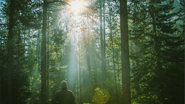 forest_man_sunlight
