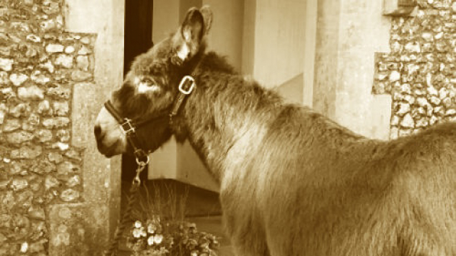 old_donkey_picture