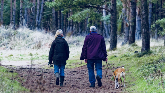 pair_walking_dog_forest