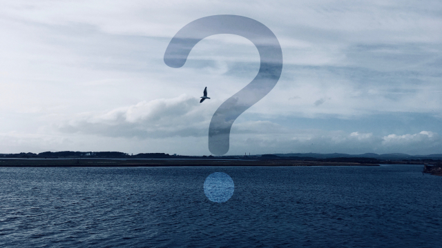 question_mark_bird_sky_sea