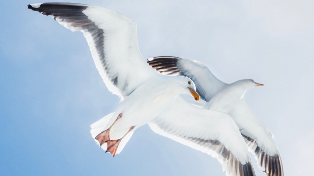 seagulls_flying_sky_unsplash