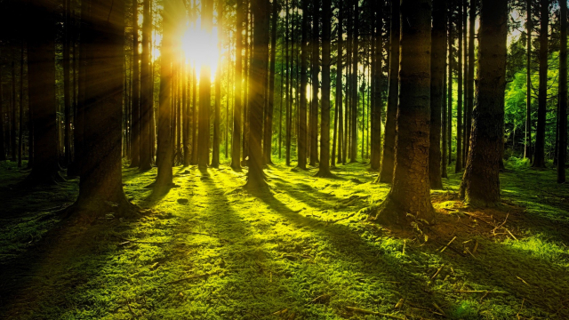 sun_trees_forest