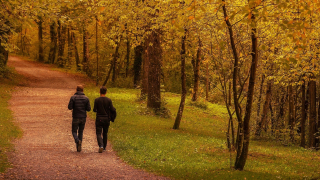 walking_together_path_trees_autumn